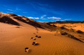 desert - John the Baptist
