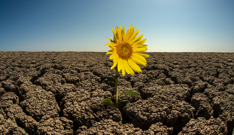How Do You Bloom Where You Are Planted?