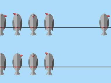 bird-fix