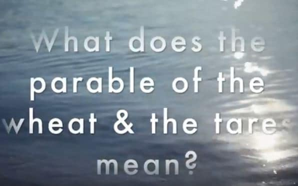 VIDEO: Bible 101 – What Does the Parable of the Wheat and the Tares Mean?